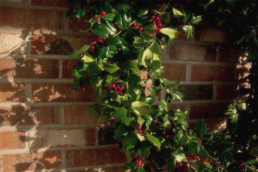 simple holly wreath for Christmas