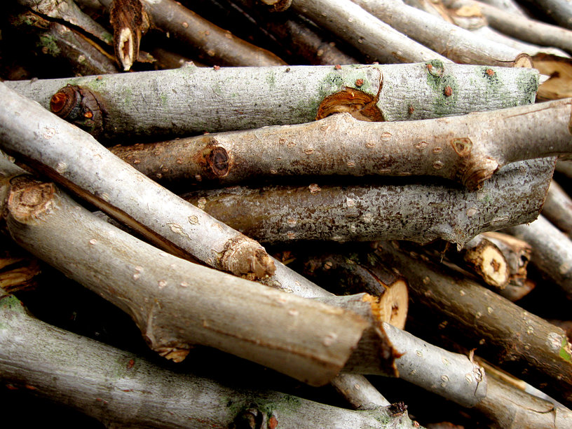 Logs are green building materials