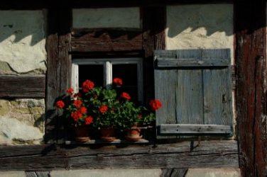 Old log cabin shutters