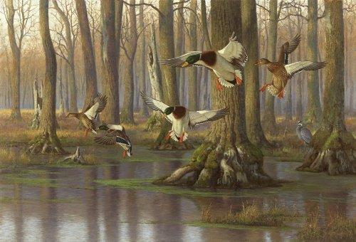 rug with mallard ducks landing in a cypress swamp