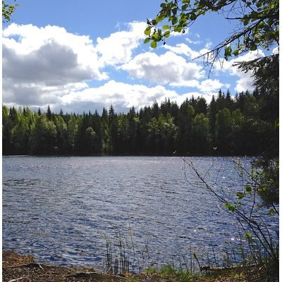 Pretty northwoods scene with lake